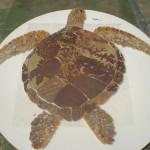 Mosaico de Pedras Naturais TartarugaMosaico de Pedras Naturais Tartaruga